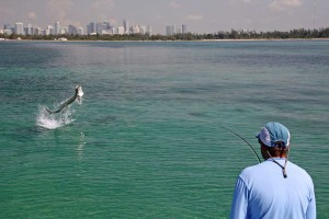 3d8edacd76be ... tarpon-miami-carl-ball-fishing-guide-florida-sfw. Most trips start on Key  Biscayne ...
