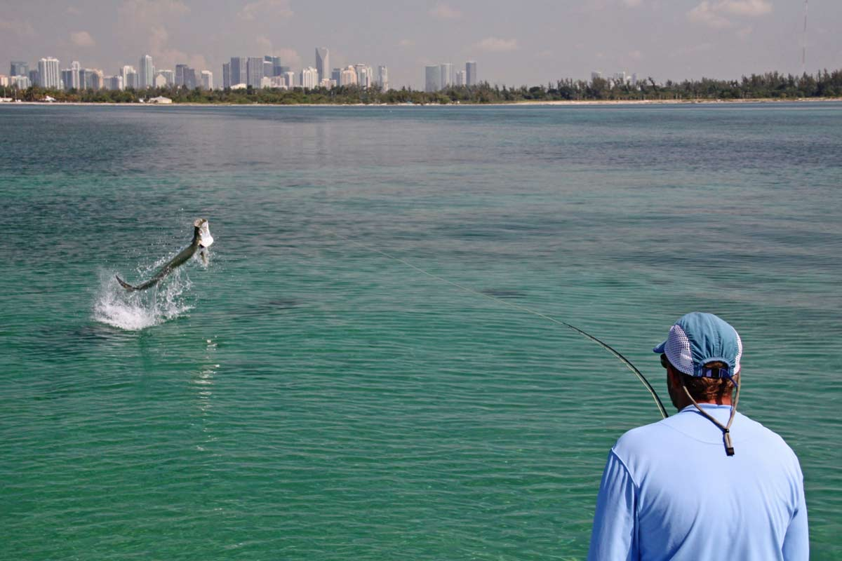 Tarpon miami carl ball fishing guide florida sfw awol for Fly fishing miami