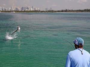Awol fishing guide miami fort lauderdale for Fishing spots in fort lauderdale